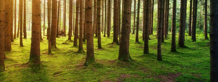Metsä Sijoituskohteena