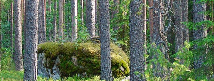 Suomen sijoitusmetsät